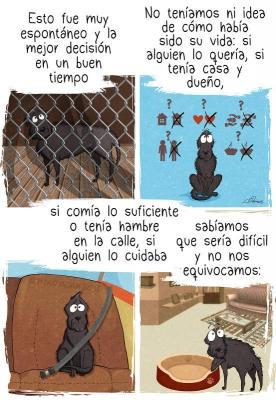 10+ Cosas de las que nos damos cuenta cuando adoptamos un perro de refugio