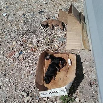 Concienciación! Encontrados cachorros muertos en los basureros de Roquetes